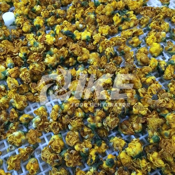 IKE-Golden Camellia Drying Machine, Hay Drying Machine, Flower Freeze Drying Machine-1