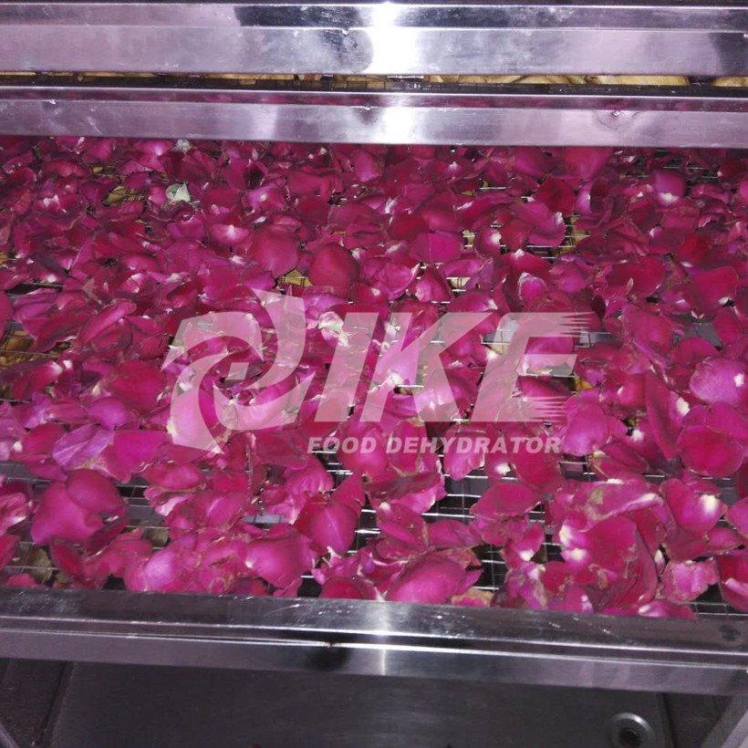 IKE Array image12
