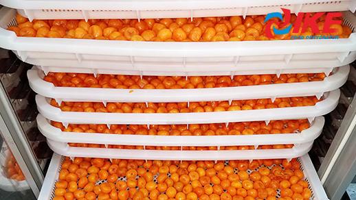Salted Egg Yolk Dehydrate By IKE 15 Trays Food Dehydrator