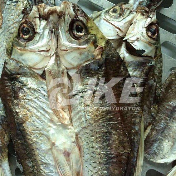 Deshidratador de pescado
