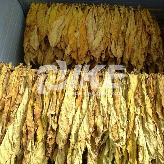 Máquina secadora de tabaco