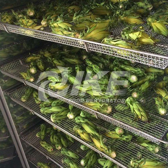IKE-Pitaya Flower Drying Machine, Vegetable Dehydration Plant, Dehydrator For Fruits And Vegetables