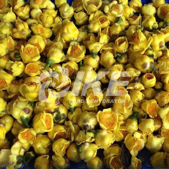 Máquina de secado Golden Camellia