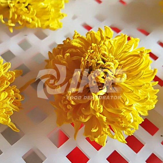 Máquina de secado de crisantemo amarillo