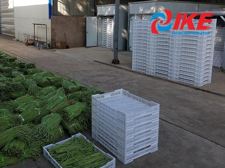 How To Dehydrate Long Beans By IKE WRH-1200A Drying Chamber