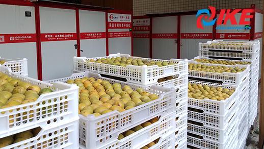 Cómo deshidratar Siraitia grosvenorii por el deshidratador industrial de alimentos IKE