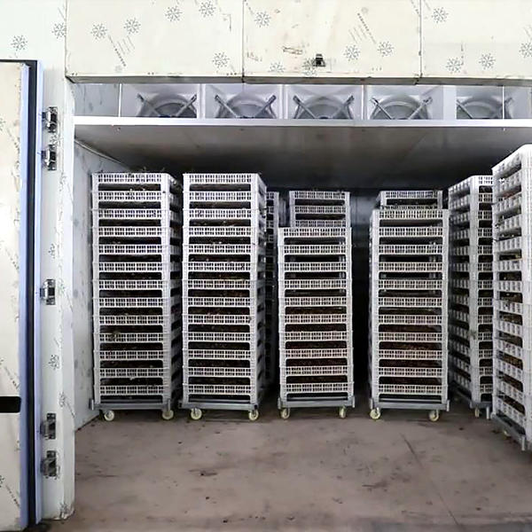 commercial low steel middle dehydrator machine IKE