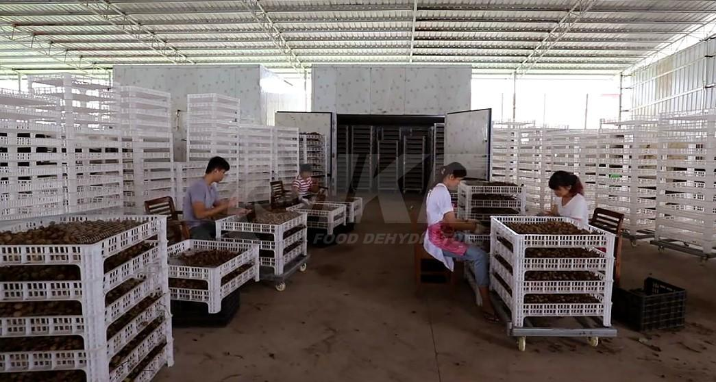 professional food dehydrator food low fruit dehydrator machine manufacture