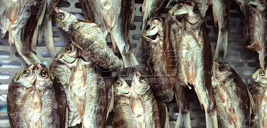 IKE-Fish Drying Machine, Fish Dehydrator, Fish Drying Machine Price