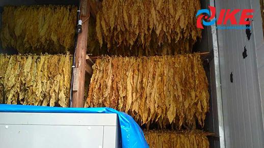 Cómo secar el tabaco en la sala de secado IKE.