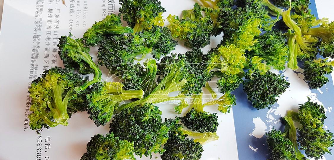 IKE-Read News About Broccoli Dehydrator From Ike Food Dehydrator Supplier