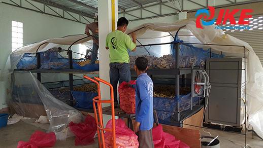 Corn drying by IKE industrial corn drying machine