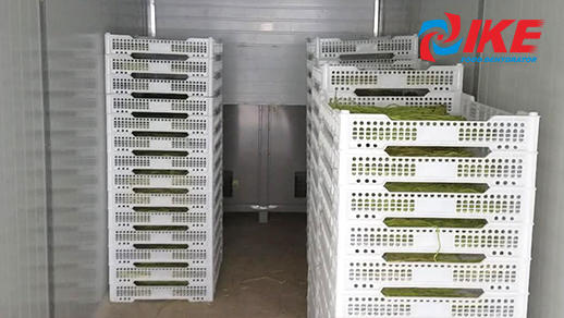 industrial dehydrator room with WHR-1200A raw food dehydrator