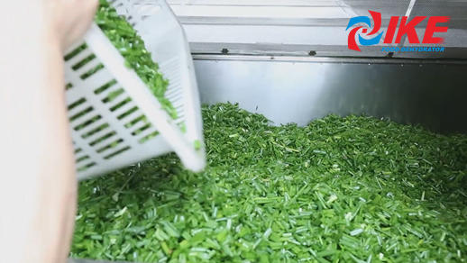 Scallion Drying By IKE All-in-one Drying System