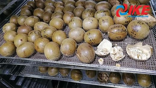 Monk Fruit Drying By IKE Monk Fruit Dryer